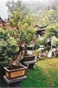 tn_bonsai_004